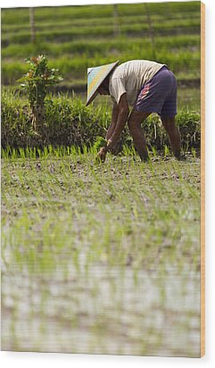 Wood Print featuring the photograph Rice Farmer - Bali by Matthew Onheiber