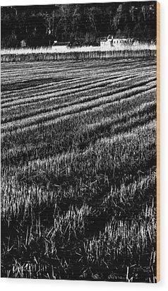 Rice Paddies Wood Print by Edgar Laureano