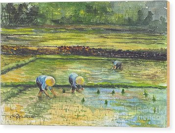 The Rice Paddy Field Wood Print