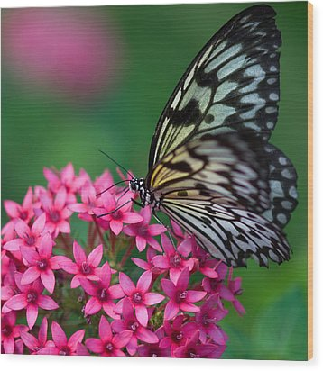 Rice Paper Butterfly Wood Print by Joann Vitali