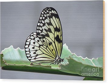 Rice Paper Butterfly On A Leaf Wood Print by Inspired Nature Photography Fine Art Photography