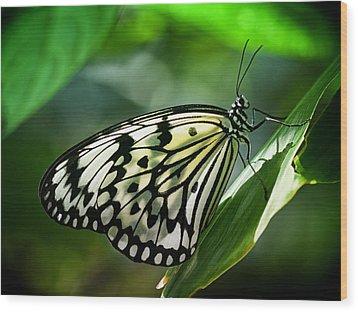 Wood Print featuring the photograph Rice Paper Butterfly by Zoe Ferrie