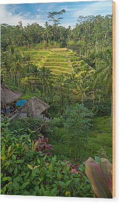 Wood Print featuring the photograph Rice Terraces - Bali by Matthew Onheiber