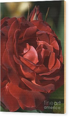 Wood Print featuring the photograph Rich Is Rose by Joy Watson