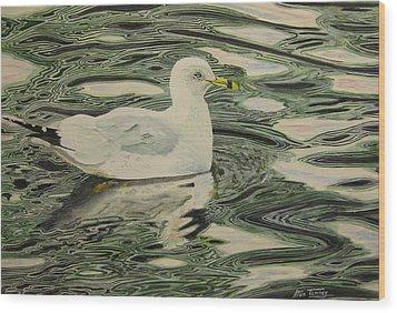 Ring Bill Seagull Wood Print