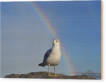 Ring Billed Seagull At Niagara Falls Wood Print