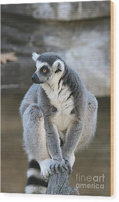 Wood Print featuring the photograph Ring-tailed Lemur #3 by Judy Whitton