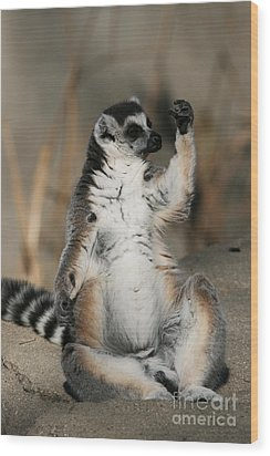 Wood Print featuring the photograph Ring-tailed Lemur by Judy Whitton