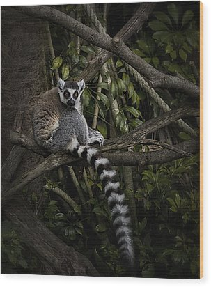 Wood Print featuring the photograph Ring Tailed Lemur by Kim Andelkovic