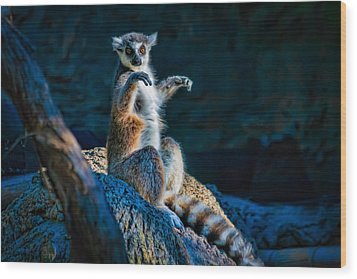 Ring-tailed Lemur Wood Print by Tim Stanley