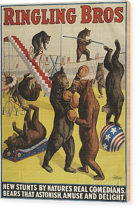 Ringling Bros 1900s Bears Performing Wood Print by The Advertising Archives