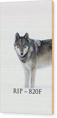 Rip 820f Wood Print