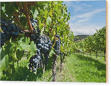 Ripe Grapes Right Before Harvest In The Summer Sun Wood Print by Ulrich Schade