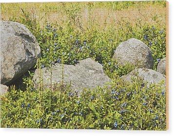 Ripe Maine Low Bush Wild Blueberries Wood Print by Keith Webber Jr