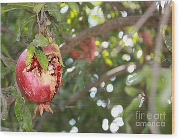 Ripe Pomegranate Wood Print by Julie Alison