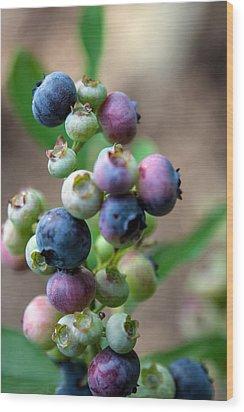 Ripening Blueberries Wood Print
