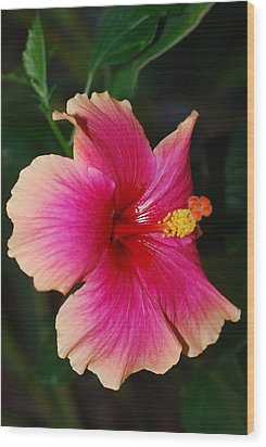 Rise And Shine - Hibiscus Face Wood Print by Connie Fox