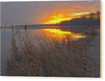 Wood Print featuring the photograph Rising Sunlights Up Shore Line Of Cattails by Randall Branham
