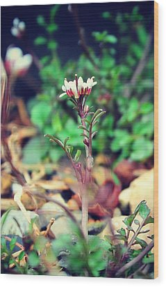 Wood Print featuring the photograph Rising Wildflower by Candice Trimble