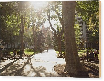 Rittenhouse In The Sun Wood Print