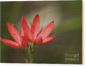 Wood Print featuring the photograph River Lily by Liz  Alderdice