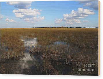 River Of Grass Wood Print by Theresa Willingham
