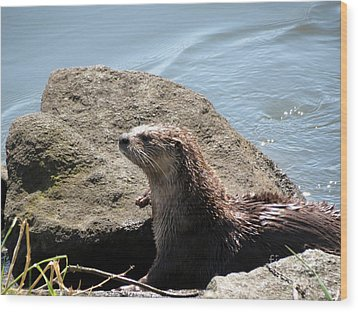 River Otter Sunning By The Lake Wood Print by Gayle Swigart