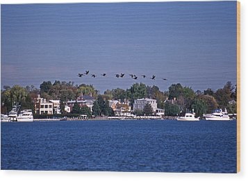 Riverfront Geese Wood Print by Skip Willits