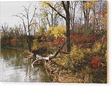 Riverfront In Fall Wood Print by Jocelyne Choquette