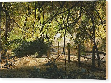 Riverwalk Locust Grove Wood Print