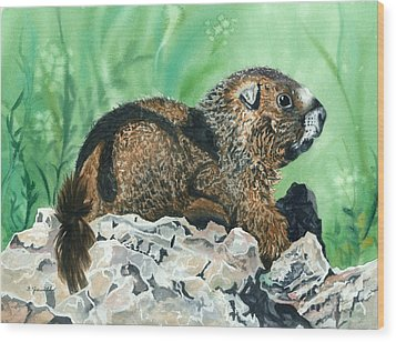 Rmbl Marmot Wood Print by Barbara Jewell