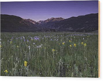 Rmnp Moraine Park Flora Sunrise Wood Print by Tom Wilbert