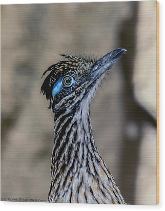 Wood Print featuring the photograph Road Runner by Elaine Malott