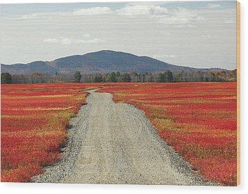 Road Through Autumn Blueberry Maine Wood Print by Scott Leslie