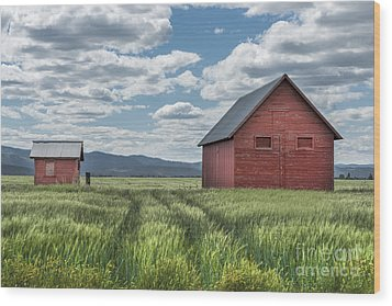 Road To Nowhere Wood Print by Sandra Bronstein