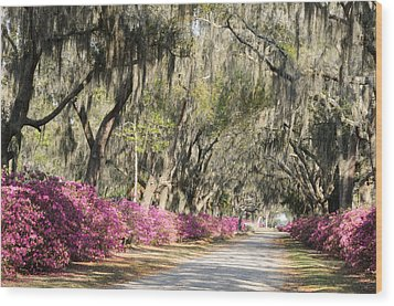 Wood Print featuring the photograph Road With Azaleas And Live Oaks by Bradford Martin