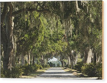 Wood Print featuring the photograph Road With Live Oaks by Bradford Martin