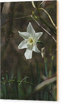 Roadside White Narcissus Wood Print by Rebecca Sherman