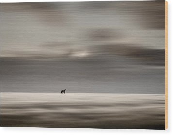 Roaming Free Wood Print by Gary Smith