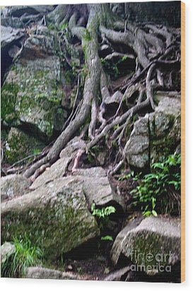 Roaming Tree Roots Wood Print