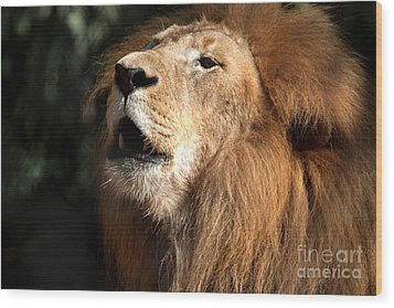 Wood Print featuring the photograph Roar - African Lion by Meg Rousher