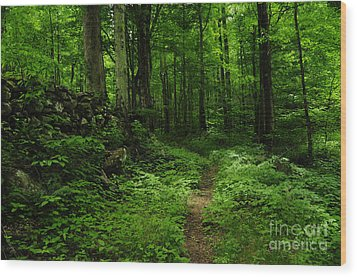 Wood Print featuring the photograph Roaring Fork Trail by Debbie Green