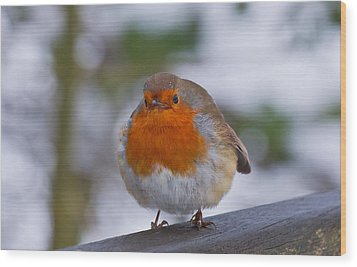 Robin 1 Wood Print by Scott Carruthers