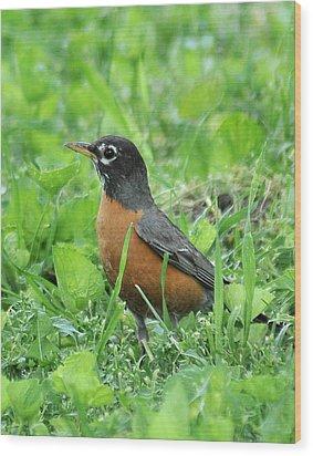 Robin 370 Wood Print