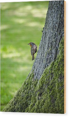 Robin At Rest Wood Print by Spikey Mouse Photography