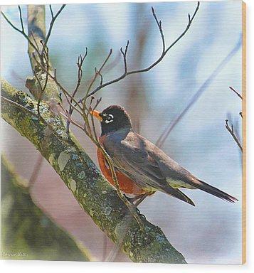 Robin Wood Print by Bonnie Willis