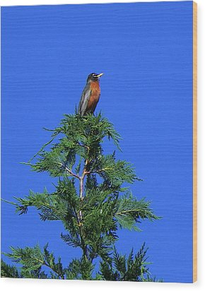 Robin Christmas Tree Topper Wood Print by Bill Swartwout