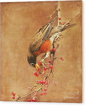 Robin Eating Berries Wood Print by Olivia Hardwicke