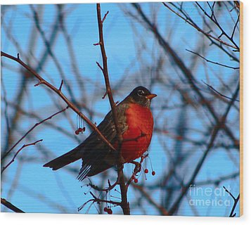 Wood Print featuring the photograph Robin by Gena Weiser