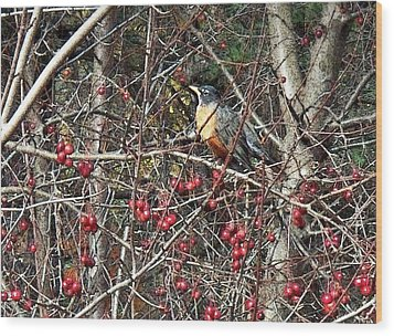 Robin In The Crab Apple Trees Wood Print